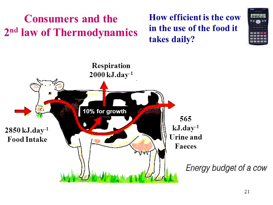 Primary Producers and the 2 nd law of Thermodynamics (Output) (Output) (Output) 20