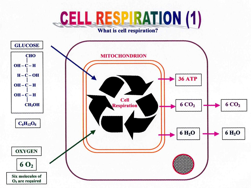 Photosynthesis and the 2 nd law of Thermodynamics What is the efficiency of photosynthesis? 19
