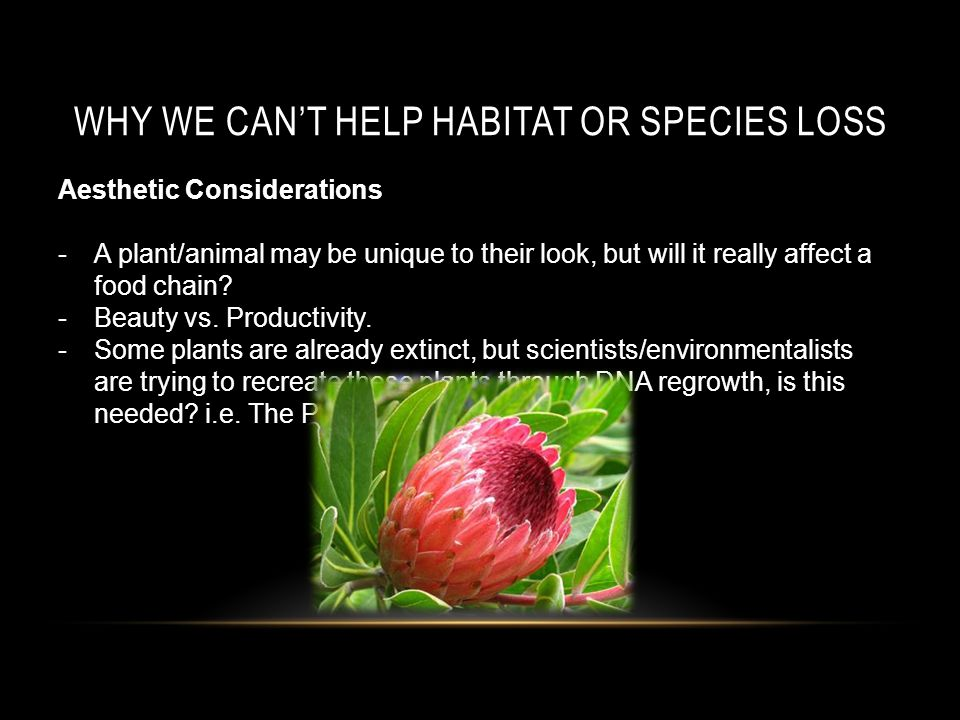 WHY WE CAN'T HELP HABITAT OR SPECIES LOSS Aesthetic Considerations -A plant/animal may be unique to their look, but will it really affect a food chain