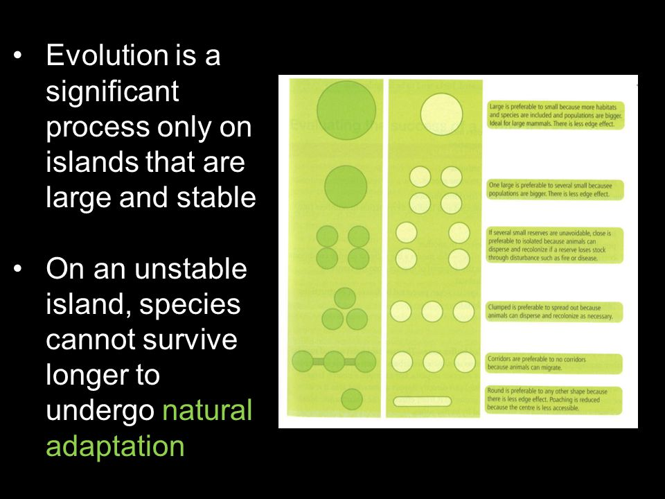 Evolution is a significant process only on islands that are large and stable On an unstable island, species cannot survive longer to undergo natural a