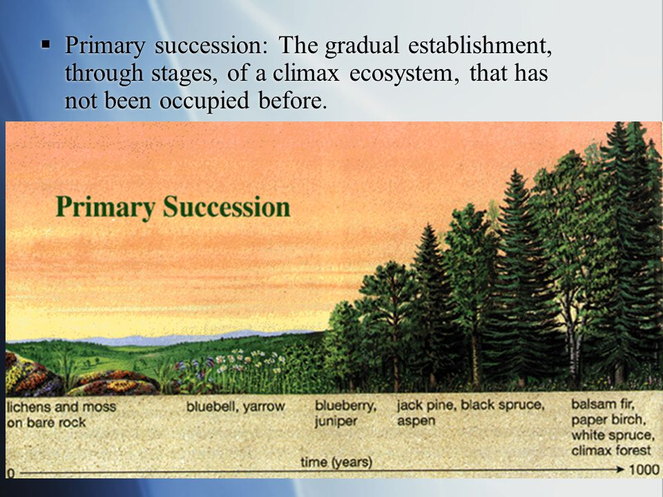 Ecological Succession: Be able to describe the process of primary and secondary succession in a named habitat.