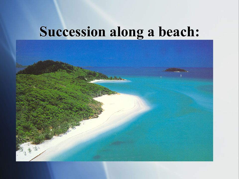 Succession along a beach:  The gradual conversion of sandy beaches and desert margins to forest.  Wind moves sand into dunes  Organic material, see
