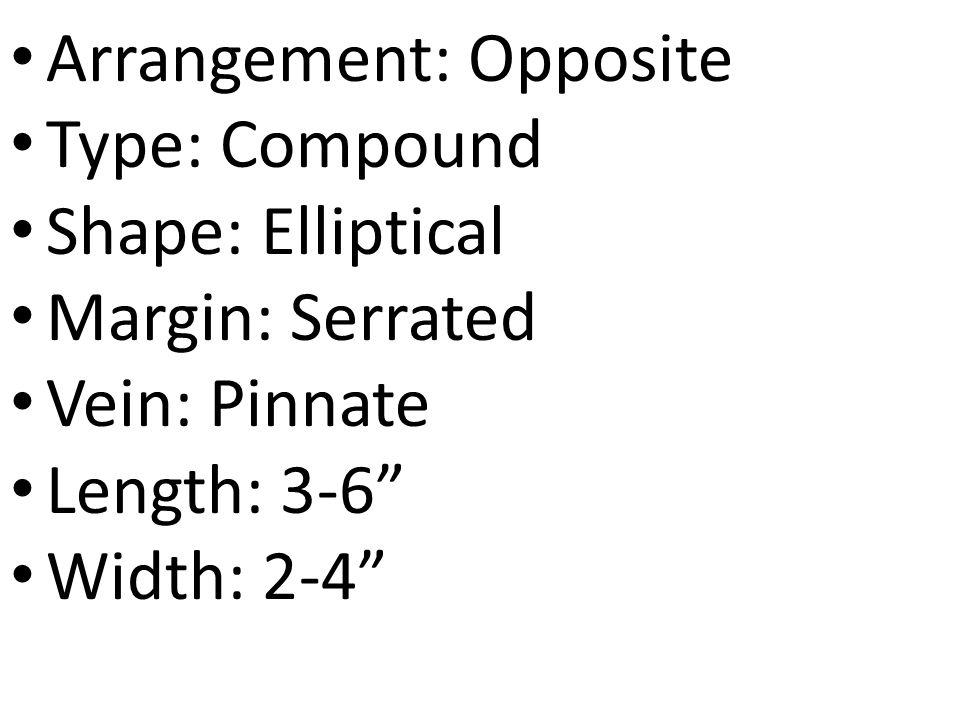 "Arrangement: Opposite Type: Compound Shape: Elliptical Margin: Serrated Vein: Pinnate Length: 3-6"" Width: 2-4"""