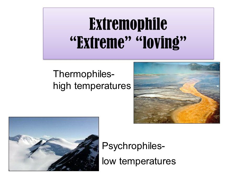 "Extremophile ""Extreme"" ""loving"" Psychrophiles- low temperatures Thermophiles- high temperatures"