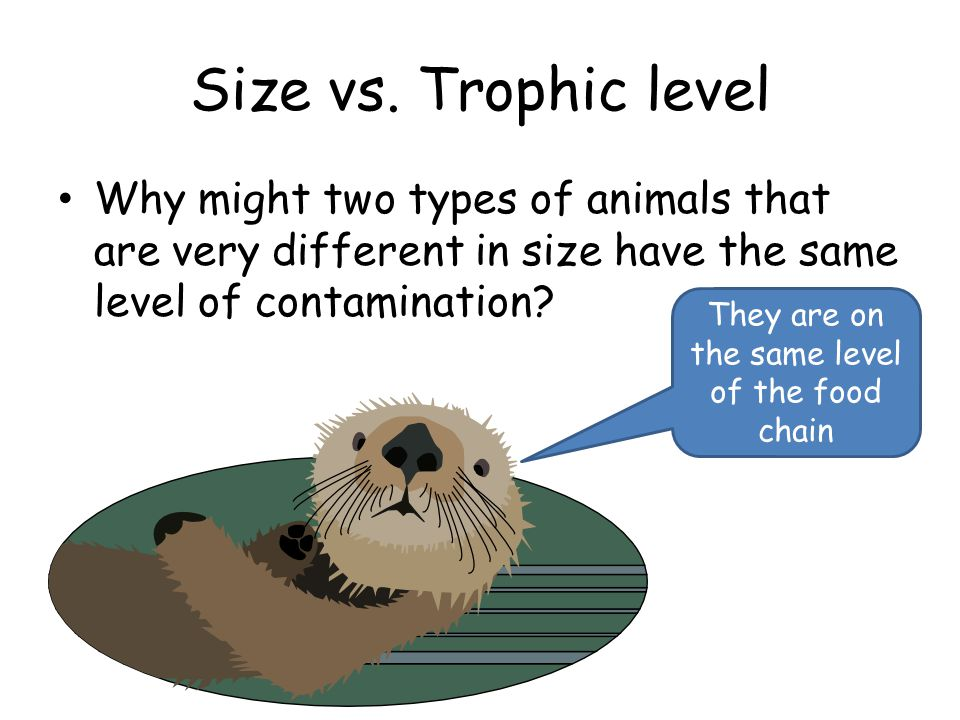 Size vs. Trophic level Why might two types of animals that are very different in size have the same level of contamination? They are on the same level
