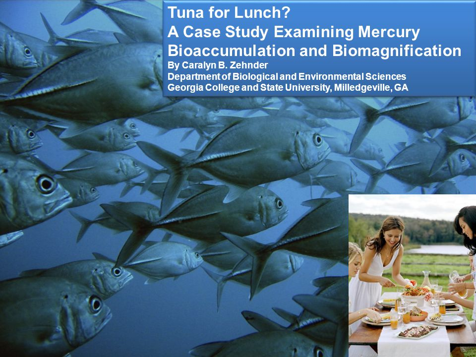 Key Questions to answer How does mercury get into the food chain.