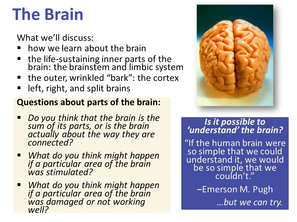 The Brain What we'll discuss:  how we learn about the brain  the life-sustaining inner parts of the brain: the brainstem and limbic system  the out