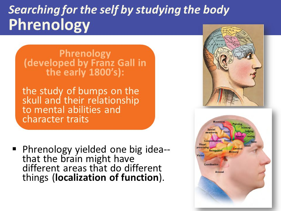 Searching for the self by studying the body Phrenology  Phrenology yielded one big idea-- that the brain might have different areas that do different