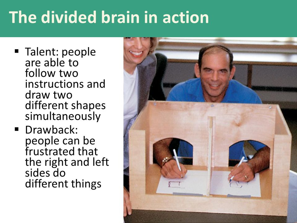 The divided brain in action  Talent: people are able to follow two instructions and draw two different shapes simultaneously  Drawback: people can b