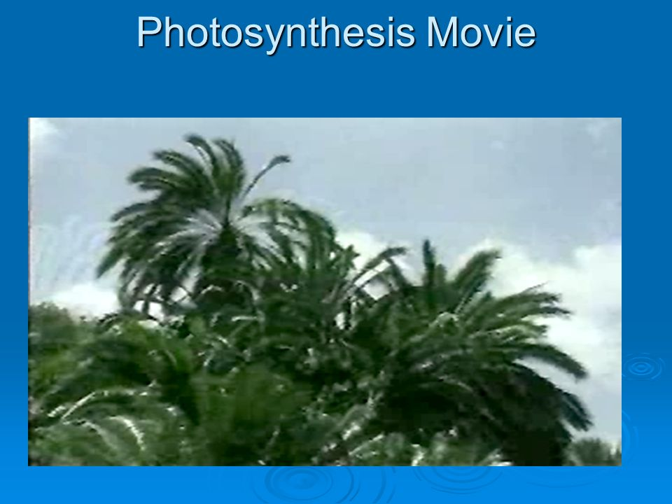 Photosynthesis Movie