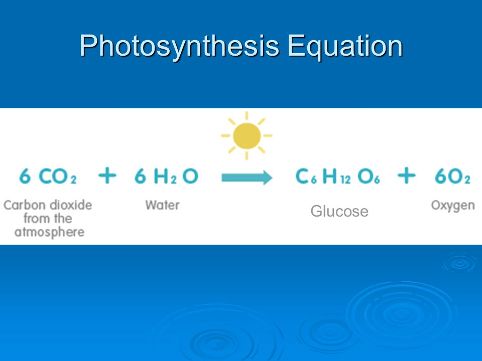 Photosynthesis Equation Glucose