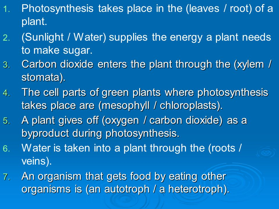 1.1. Photosynthesis takes place in the (leaves / root) of a plant.