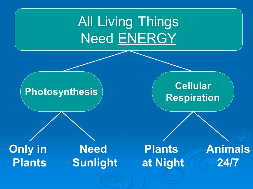All Living Things Need ENERGY Photosynthesis Cellular Respiration Only in Plants Need Sunlight Plants at Night Animals 24/7