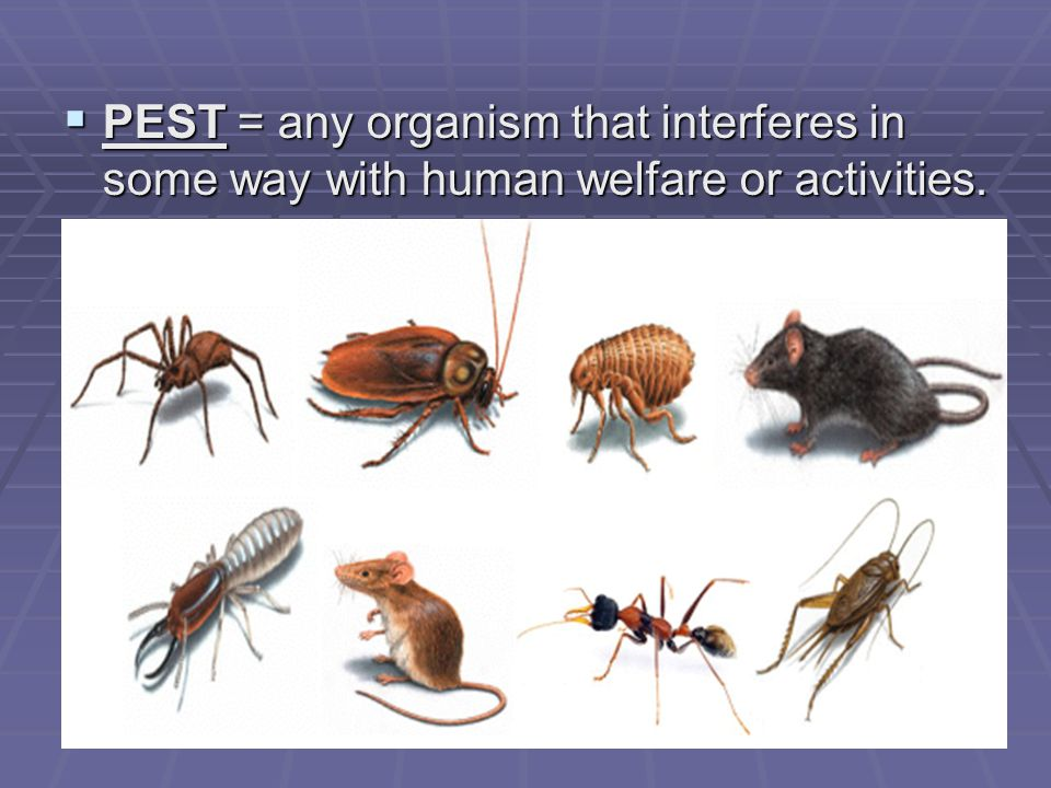 Genetic Controls  Create a pest-resistant crop by crossing pest- resistant plants w/ non-resistant.