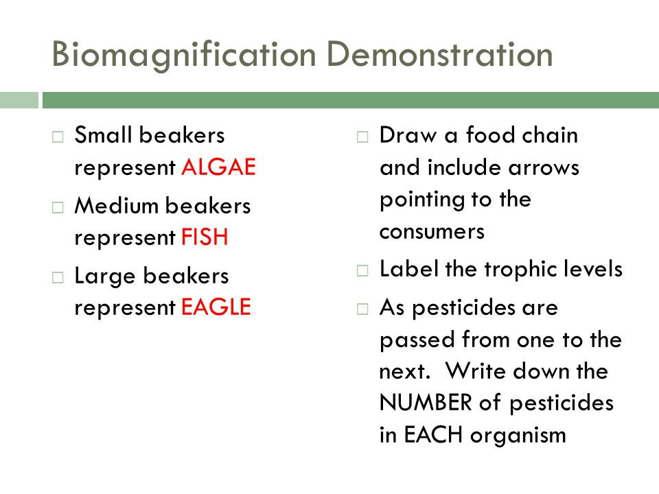 Biomagnification Demonstration  Small beakers represent ALGAE  Medium beakers represent FISH  Large beakers represent EAGLE  Draw a food chain and include arrows pointing to the consumers  Label the trophic levels  As pesticides are passed from one to the next.