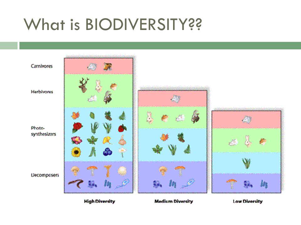 What is BIODIVERSITY??