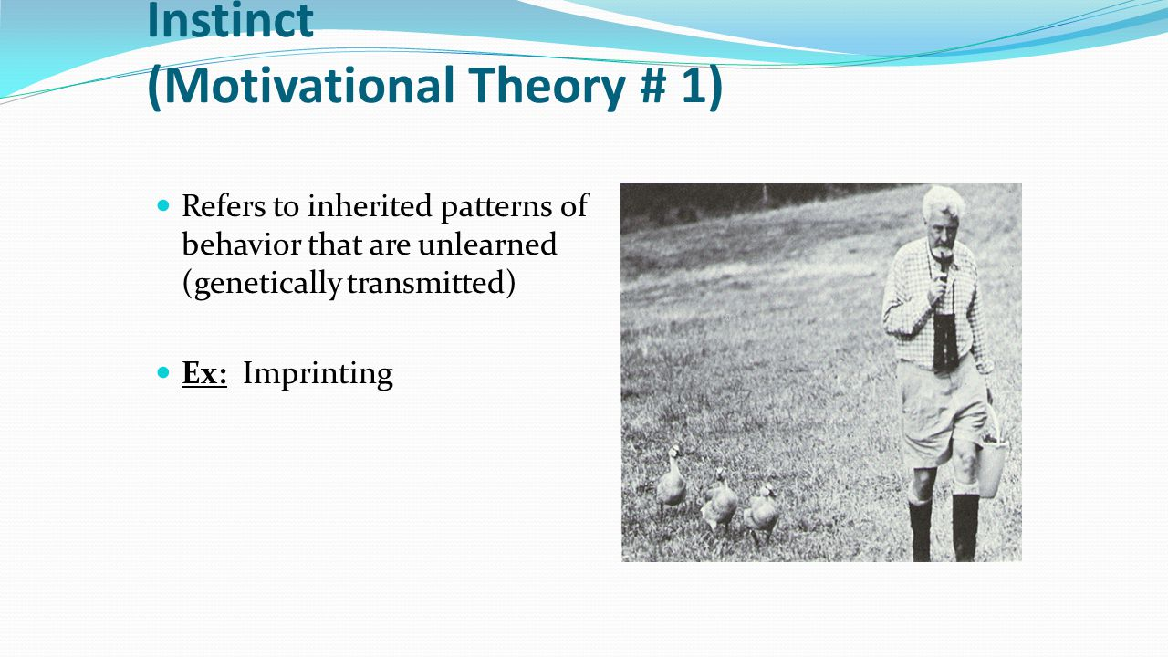 Instinct (Motivational Theory # 1) Refers to inherited patterns of behavior that are unlearned (genetically transmitted) Ex: Imprinting