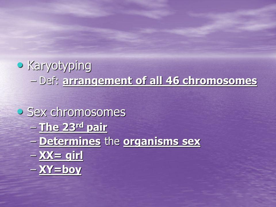Karyotyping Karyotyping –Def: arrangement of all 46 chromosomes Sex chromosomes Sex chromosomes –The 23 rd pair –Determines the organisms sex –XX= gir