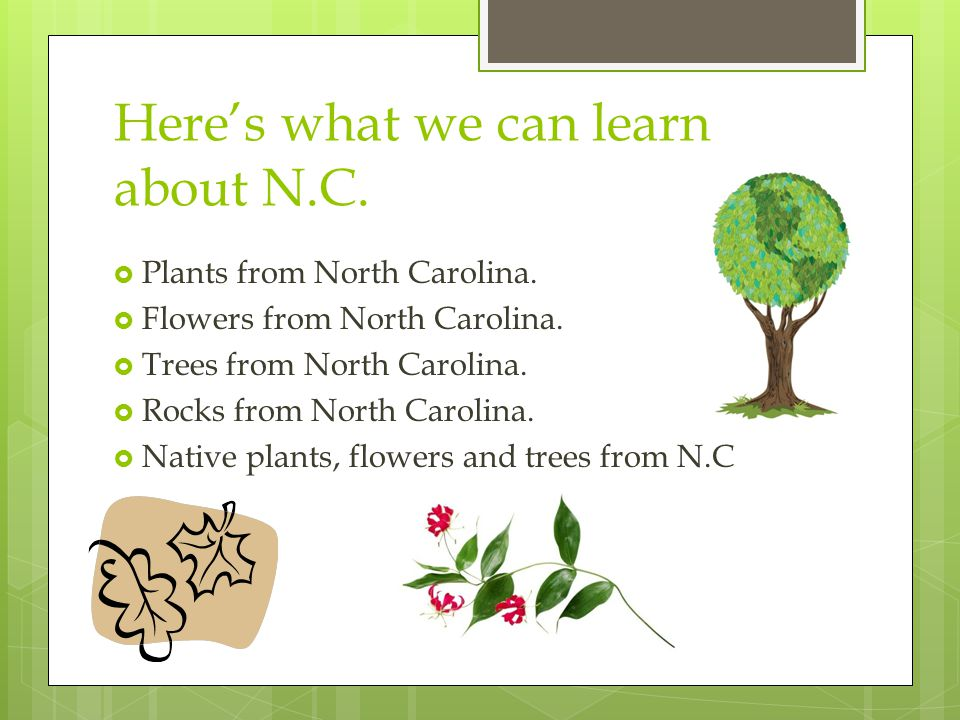 Here's what we can learn about N.C.  Plants from North Carolina.  Flowers from North Carolina.  Trees from North Carolina.  Rocks from North Carol