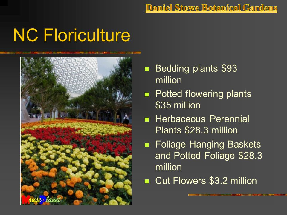 NC Floriculture Bedding plants $93 million Potted flowering plants $35 million Herbaceous Perennial Plants $28.3 million Foliage Hanging Baskets and Potted Foliage $28.3 million Cut Flowers $3.2 million