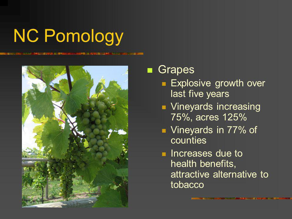 NC Pomology Grapes Explosive growth over last five years Vineyards increasing 75%, acres 125% Vineyards in 77% of counties Increases due to health ben