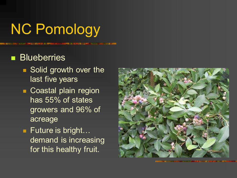 NC Pomology Blueberries Solid growth over the last five years Coastal plain region has 55% of states growers and 96% of acreage Future is bright… dema