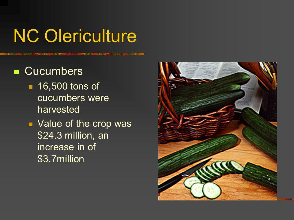NC Olericulture Cucumbers 16,500 tons of cucumbers were harvested Value of the crop was $24.3 million, an increase in of $3.7million