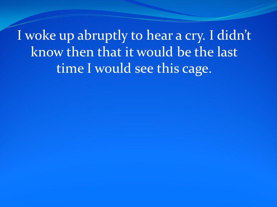 I woke up abruptly to hear a cry.