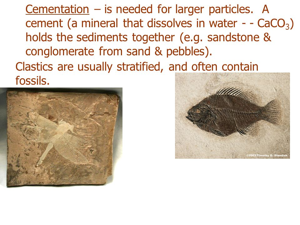 Cementation – is needed for larger particles. A cement (a mineral that dissolves in water - - CaCO 3 ) holds the sediments together (e.g. sandstone &