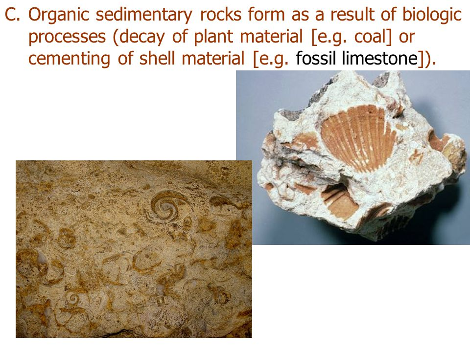 C.Organic sedimentary rocks form as a result of biologic processes (decay of plant material [e.g. coal] or cementing of shell material [e.g. fossil li