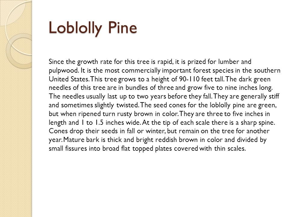 Loblolly Pine Since the growth rate for this tree is rapid, it is prized for lumber and pulpwood. It is the most commercially important forest species