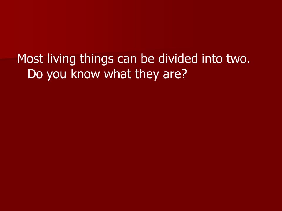 Most living things can be divided into two. Do you know what they are?