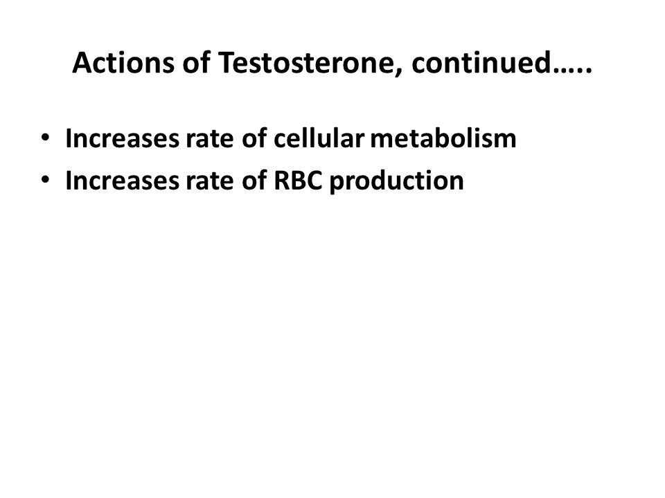 Regulation of Male Sex Hormones More testosterone = more developed secondary sex characteristics Increased levels of testosterone inhibit the hypothalamus.