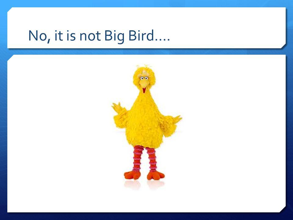 No, it is not Big Bird….