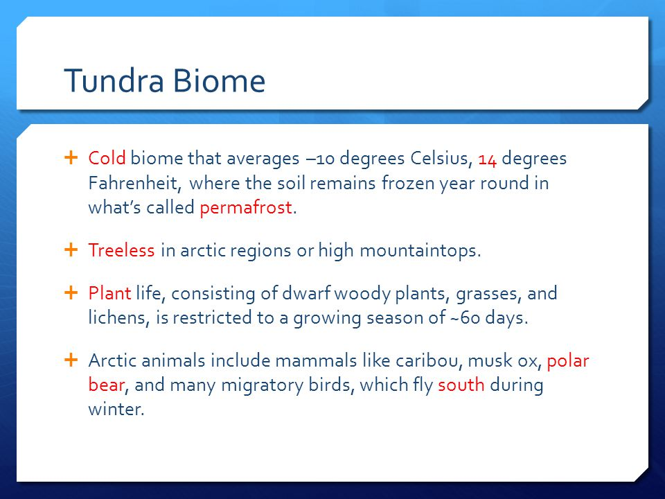 Tundra Biome  Cold biome that averages –10 degrees Celsius, 14 degrees Fahrenheit, where the soil remains frozen year round in what's called permafro