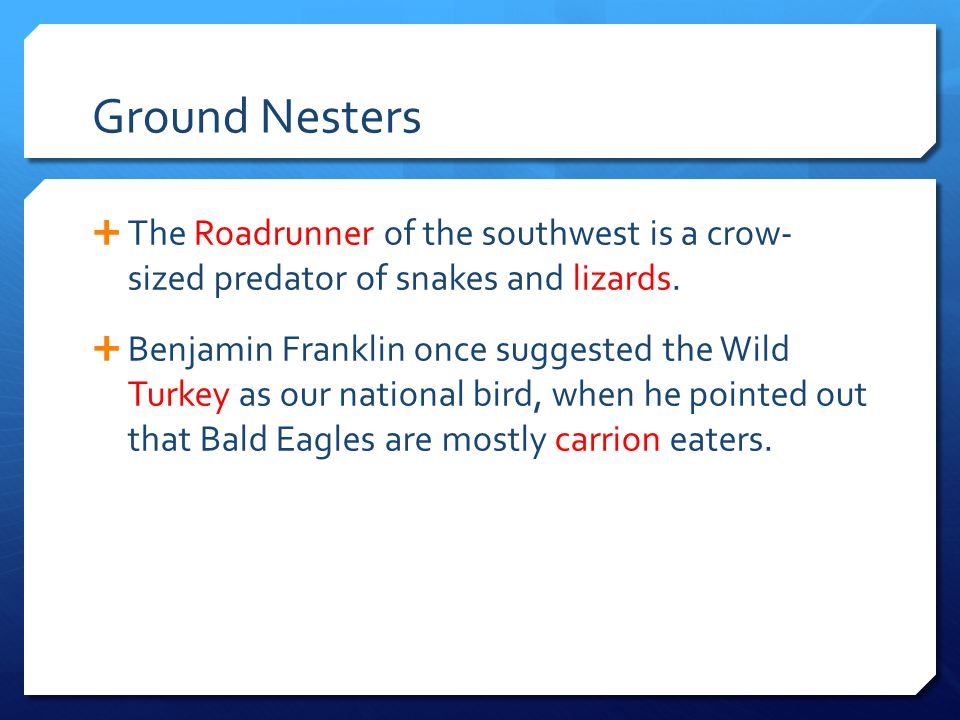 Ground Nesters  The Roadrunner of the southwest is a crow- sized predator of snakes and lizards.  Benjamin Franklin once suggested the Wild Turkey a