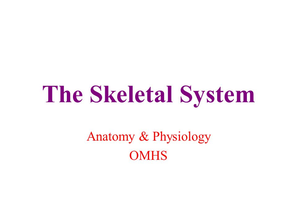 The Skeletal System Anatomy & Physiology OMHS