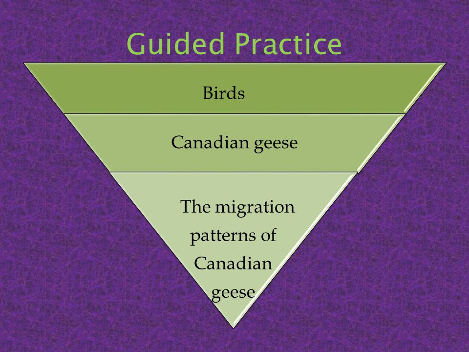 Guided Practice Birds Canadian geese The migration patterns of Canadian geese