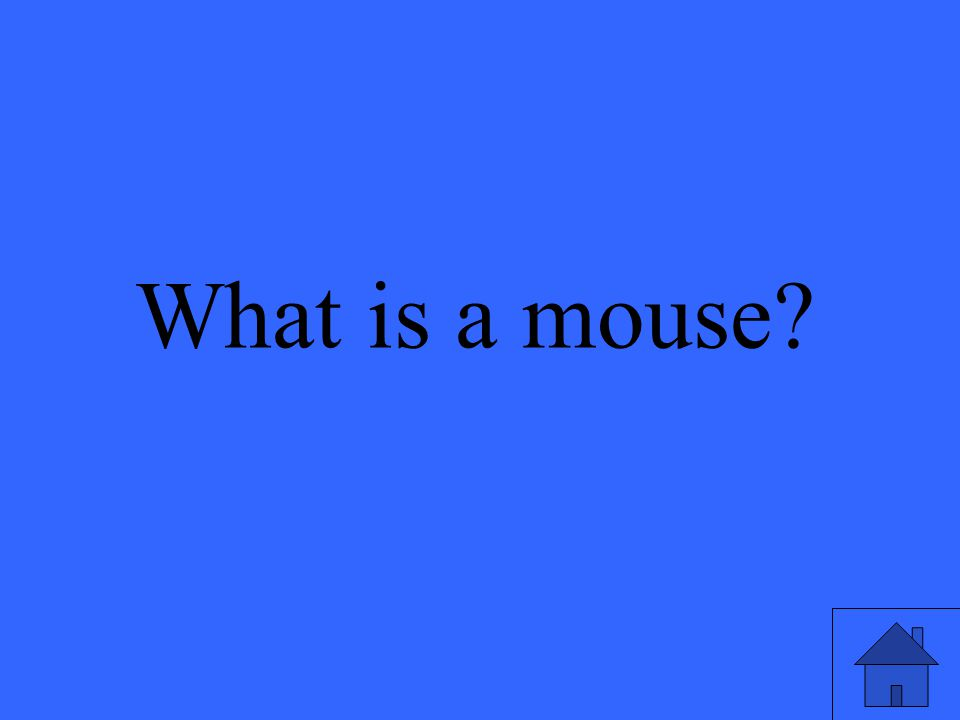 What is a mouse?