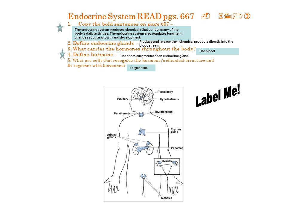 b.Pituitary gland - c. Thyroid d. Parathyroid - e.