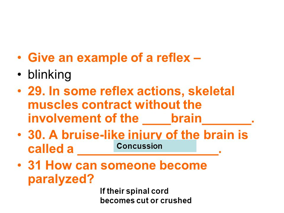 Give an example of a reflex – blinking 29. In some reflex actions, skeletal muscles contract without the involvement of the ____brain_______. 30. A br