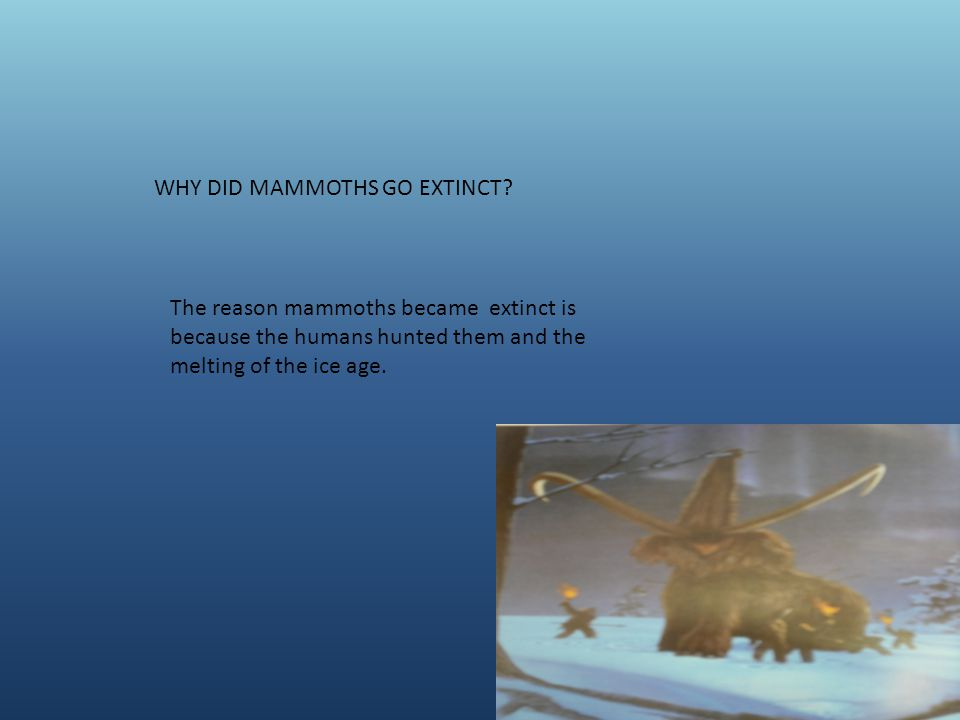 WHY DID MAMMOTHS GO EXTINCT.