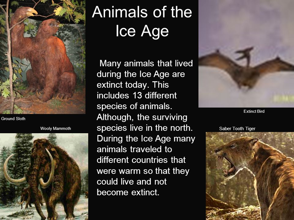 Animals of the Ice Age Many animals that lived during the Ice Age are extinct today.