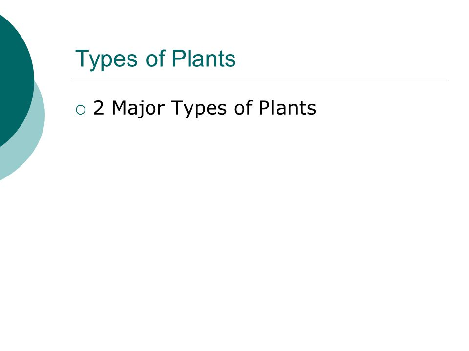 Non-Vascular Plants  Origins  Examples  Adaptations  Add a picture