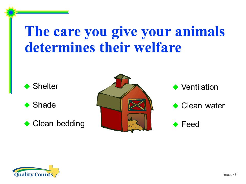 The care you give your animals determines their welfare  Shelter  Shade  Clean bedding  Ventilation  Clean water  Feed Image 46