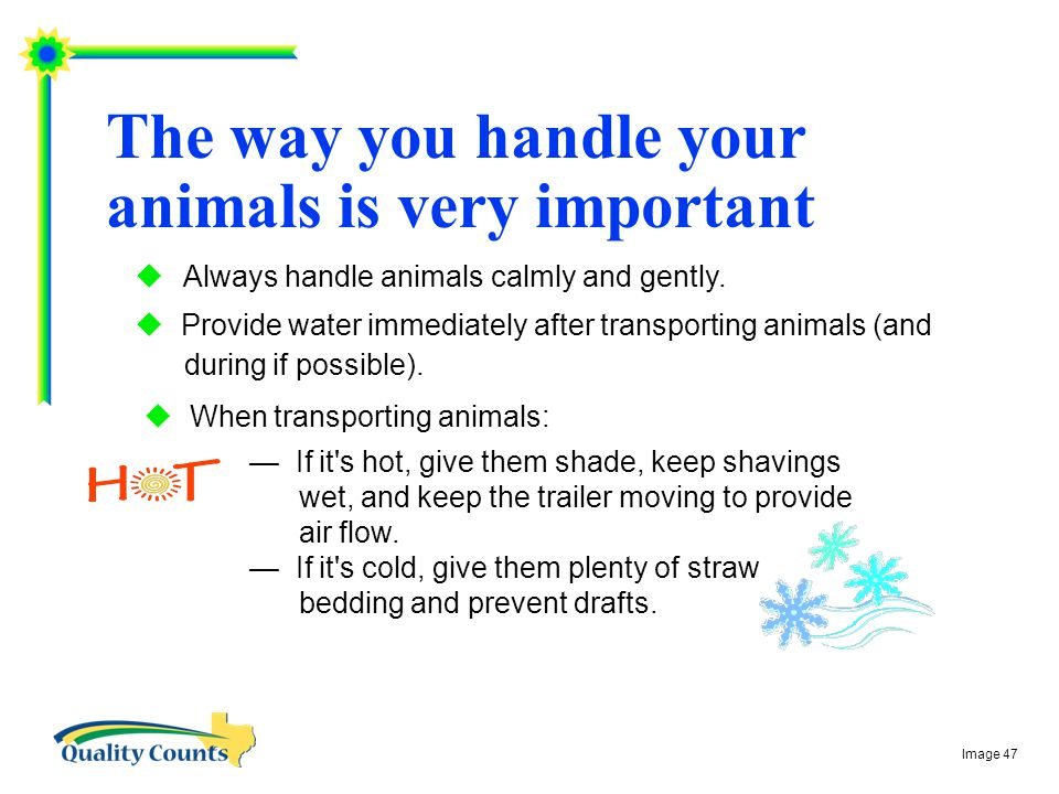 The way you handle your animals is very important  Always handle animals calmly and gently.