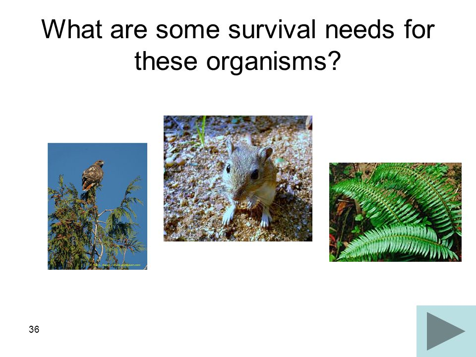 36 What are some survival needs for these organisms?