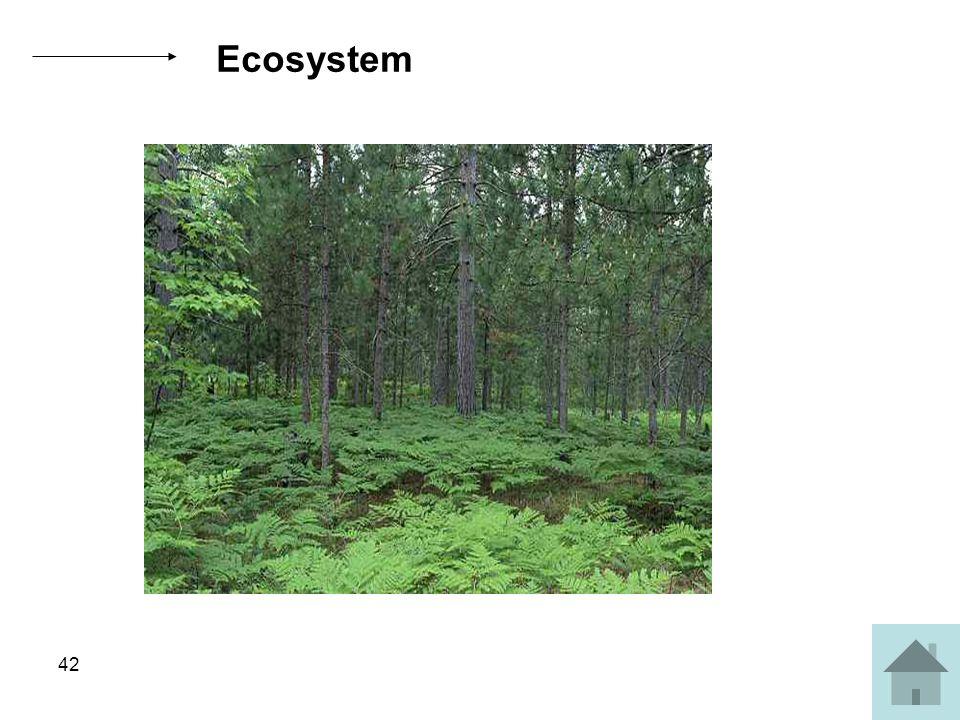 42 Ecosystem