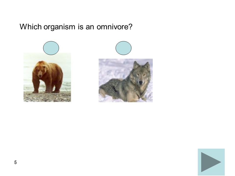 5 Which organism is an omnivore?