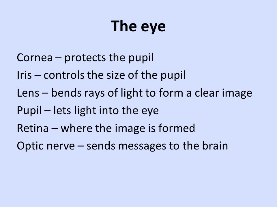 Cornea – protects the pupil Iris – controls the size of the pupil Lens – bends rays of light to form a clear image Pupil – lets light into the eye Retina – where the image is formed Optic nerve – sends messages to the brain